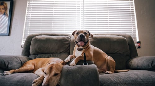 Tips for Hosting Guests When You Have a Dog