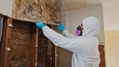 6 Surefire Benefits of Hiring Mold Testing Services