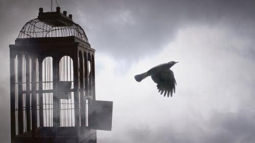 The Caged Bird