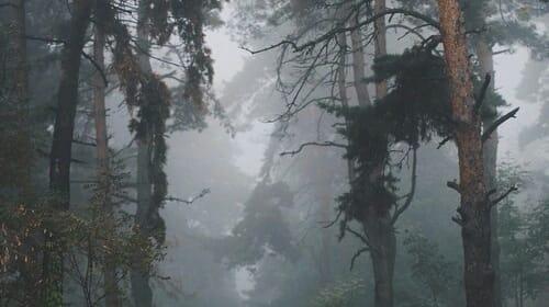 Timberland Story