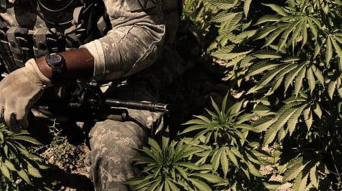 Marijuana for Veterans with PTSD
