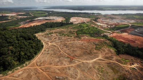 The Deforestation Crisis in Brazil