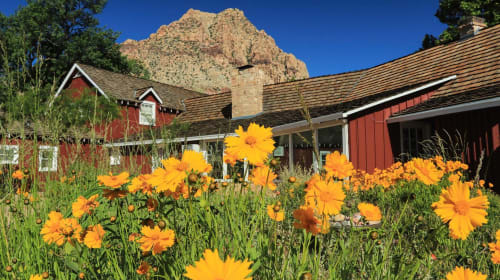 Yoga in the Meadow at Spring Mountain Ranch
