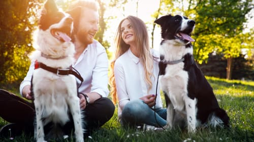 Five Things to Consider if You Have More Than One Dog