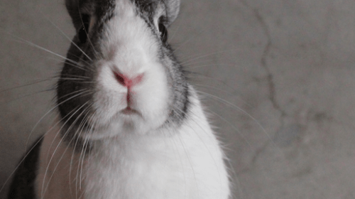 The Truth About Having a Pet Rabbit