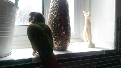You Want to Own a Bird?