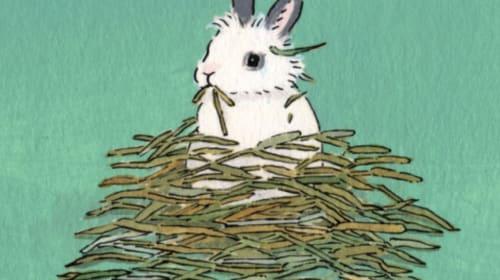 1 Rabbit, 2 Rabbit, 3 Rabbit... 6?!?