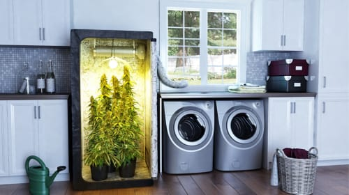 Best Marijuana Grow Kits on Amazon You Can Buy