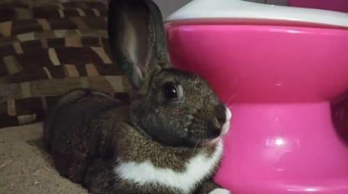Carrot Tops & Bunny Flops