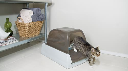How to Get Rid of Litter Box Smells