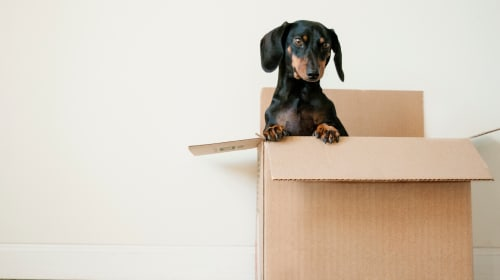 The Best Advice for House Hunting Dog Parents