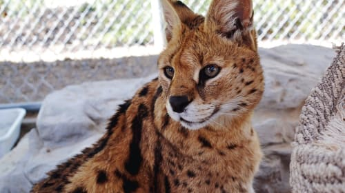 Best Animal Encounters in the Los Angeles Area