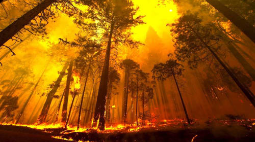 Spontaneous, Terrifying, Destructive, and Deadly – Ten Worst Forest Fires In U.S. History