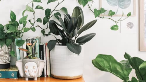Tips for Incorporating Biophilic Design Into Your Home