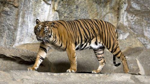 10 Beloved Animals on the Brink of Extinction