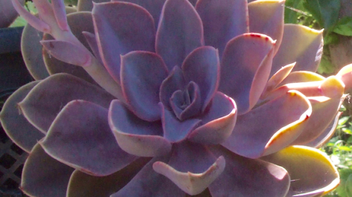 5 Reasons Why Your Succulents Are Dying