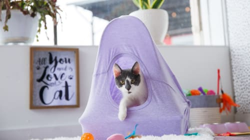 11 DIY Cat Houses You Can Easily Make