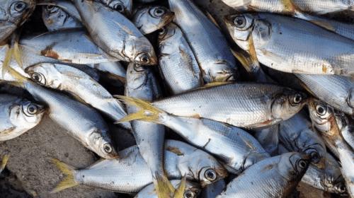 Plenty of (Dead) Fish