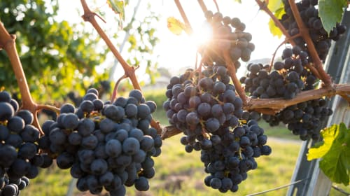 How to Get Started in the Wine Industry!