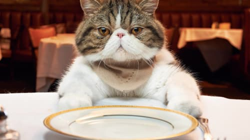 List of Human Foods Your Cat Can and Cannot Eat