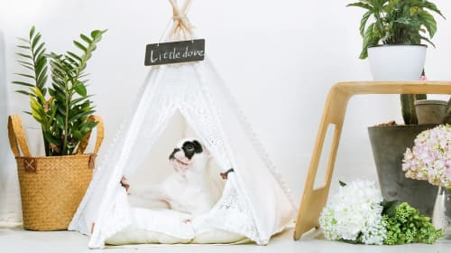 The Cutest Dog & Cat Beds Your Pets Will Love