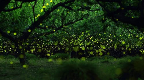 Not Growing Up with Fireflies