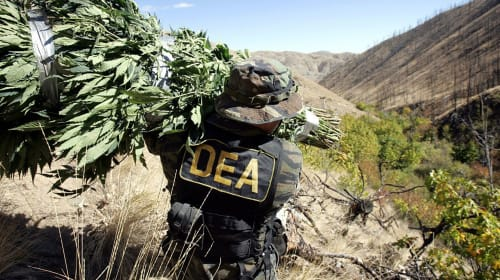Biggest Weed Busts Ever
