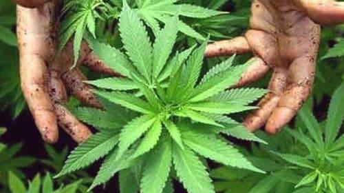 Let's Legalize Marijuana