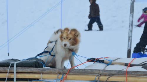 Ivakkak 2019: Northern Sled-Dog Race Across Nunavik