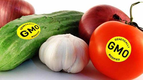 GM Food Hazards