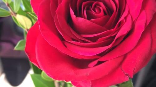 He Gave Me Flowers 💐