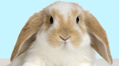 Bunny Basics 101: What You Need to Know Before Getting a Pet Rabbit