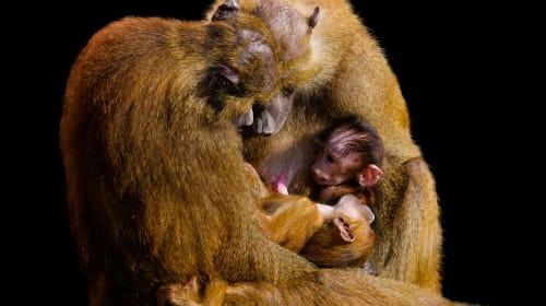 The Evolution of Hidden Fertility