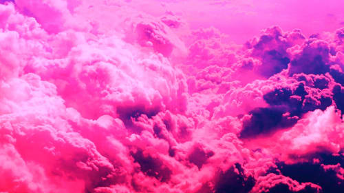 Neon Pink / Stark White