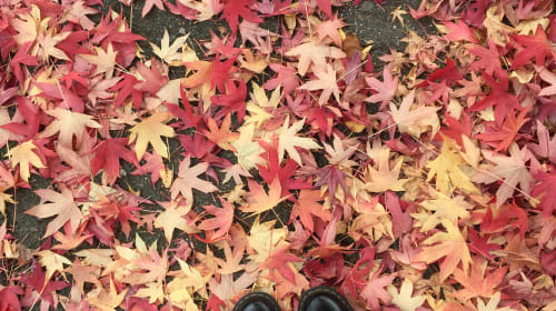 Halloween/Autumnal DIY