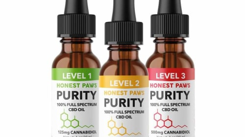 The #1 Ranked CBD Oil and Treats for Pets