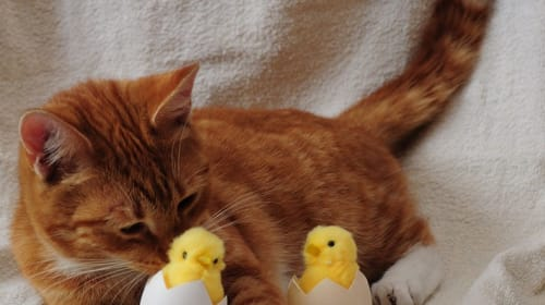 Can Cats Eat Eggs? Human Foods That Are a No-No for Kitties