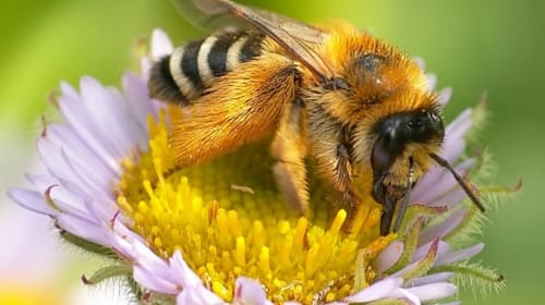 Why Are Bees So Important to Our Planet?
