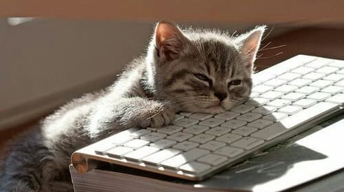 Kittens & Computers?