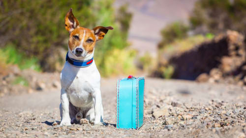 Quick and Easy Tips for Traveling with Your Dog