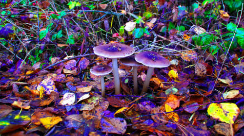 Rise of Magic Mushrooms