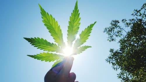 Should Marijuana be Legalised in the UK?