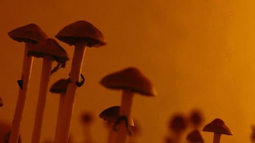 Medicinal Mushroom Magic