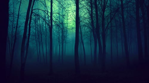 The Whispers in the Trees