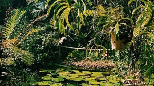 Plants That Help You Breathe