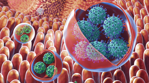 Trojan Horse Viruses, the Roundworm Disease, and the New Ebola Species
