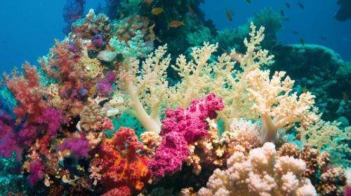 Ocean Habitats