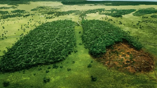 Deforestation—Causes, Effects, and Solutions