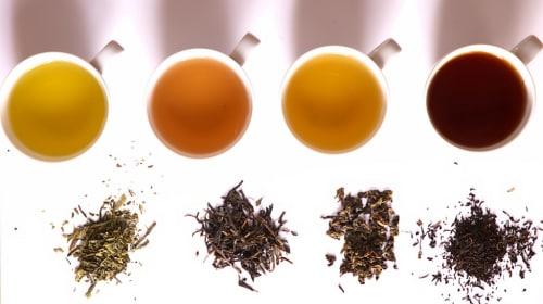 GTR: Identifying Teas Pt. 1 - White Tea