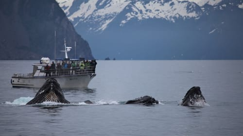 Whale Watching: A Sight to Remember